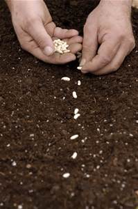 Your Future Is In Your Seed